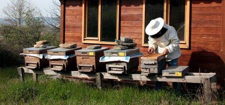 Antalya Toros Dağları'nda yetişen organik bal hasadı yapıldı, satışlarına başlandı