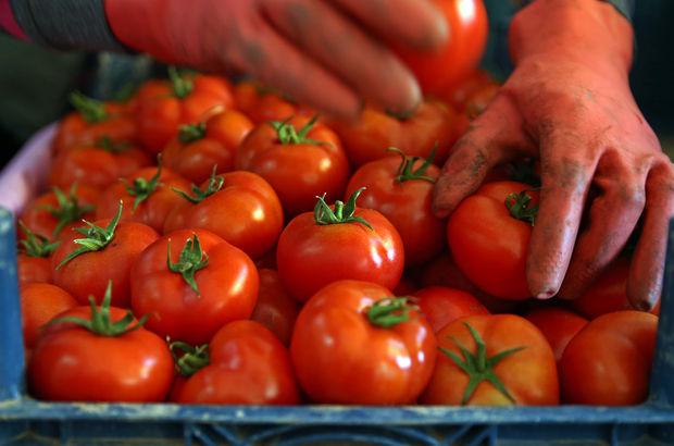 rusya domates yasak