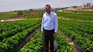 3 çiftçi ile başlanan çilek üretimi ciddi gelir sağlıyor