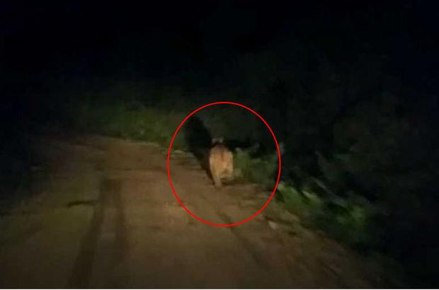 Kastamonu'da yaşandı! Aracın önündeki ayı...