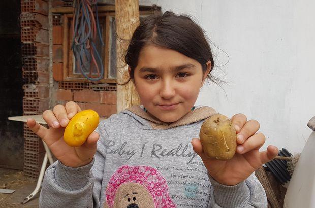 Görenler patates sanıyor, kimse nedenini bilmiyor!