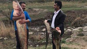 Ağrı'da amatör balıkçı boyundan büyük balık yakaladı