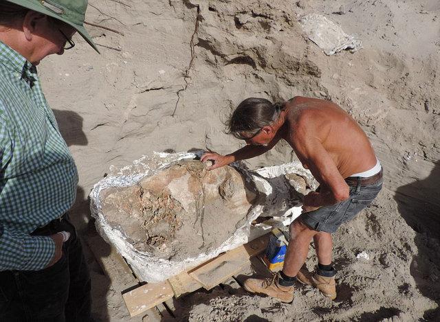 9 yaşındaki çocuk 1.2 milyon yıllık fosil buldu