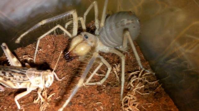 İşte dünyadaki en tehlikeli canlılar! Sarı Ömer nedir?