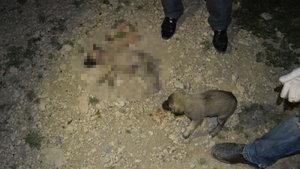 Adıyaman'da yavru köpekler vahşice katledildi