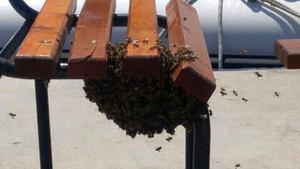 Antalya'da 2 bin bal arısı bankı istila etti