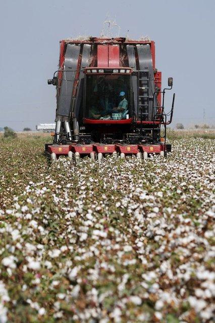 Çiftçiler bu yaz 700-800 kilogram ürün alabilirler