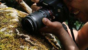 Bursa'da boynuzlu engerek yılanı görüntülendi