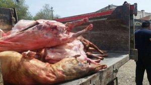 Tekirdağ'da kaza yapan araçtan çıkan 2 ton kaçak et imha edildi