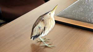Kastamonu'da Hint gölet balıkçıl kuşu bulundu