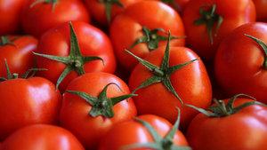 Rusların domates ihracatını engellemesiyle ilgili ara formül netleşti