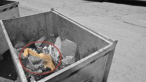 Zonguldak Alaplı'da sokak köpekleri ölü bulundu
