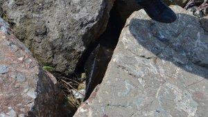 Zonguldak'ta bulunan ölü yunus balıklarının sayısı artıyor