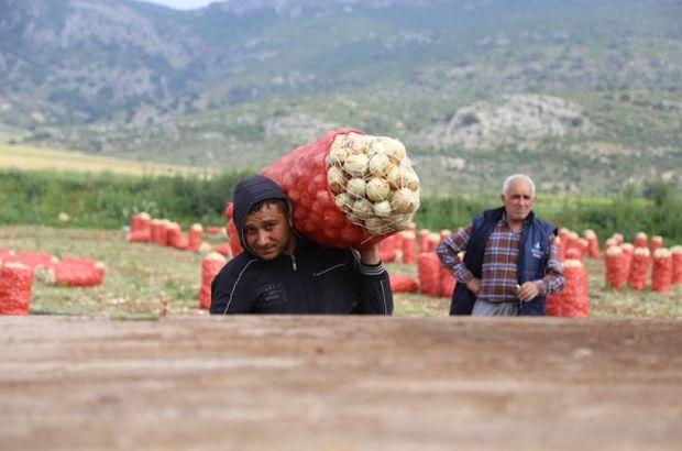patates, soğan, patates fiyatı, soğan fiyatı