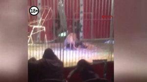 Fransa'daki sirkte aslan saldırısı!