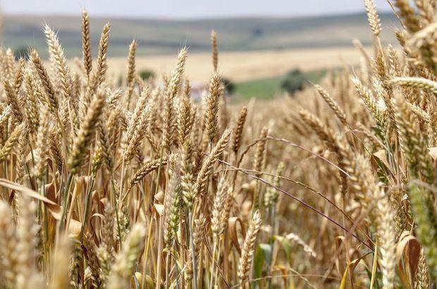 Tarım Kredi Kooperatifleri İcra Kurulu Üyesi Ekrem Eraslan