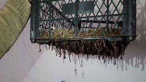 Yılda 150 ton solucan gübresi satışı yapıyor