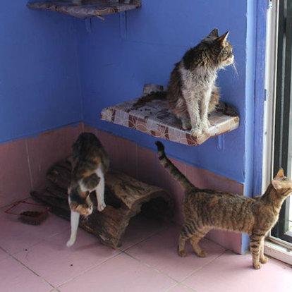 kedi köyü
