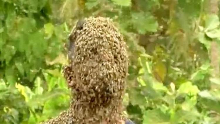 Hindistan'da genç adamın yüzüne konan 60 bin arı sosyal medyada olay oldu.