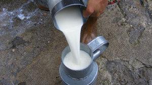 """ASÜD'den """"sokak sütü"""" uyarısı"""