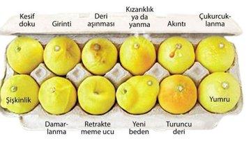 'Limonlarınızı Bilin'