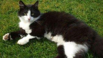 Paylaşılamayan kedi Fiocco