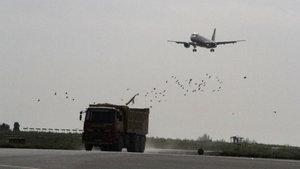 """THY'nin Kazablanka uçağının pilotu: """"Kalkış sırasında çok sayıda kuşa çarptık"""""""