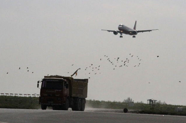 THY'nin 350 yolcu kapasiteli uçağına kuşlar çarptı!