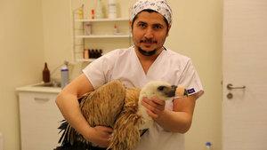 Yaralı bulunan kızıl akbaba tedavi edildi