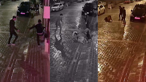 Sokak köpeğine işkence edenlere gözaltı