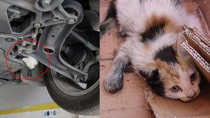 Hatay'da otomobilin motoruna sıkışan kedi 6 saatte kurtarıldı