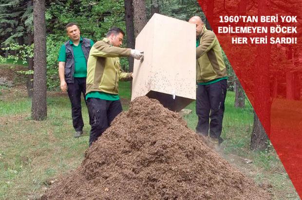 Başbakanlık'a karınca koruması!