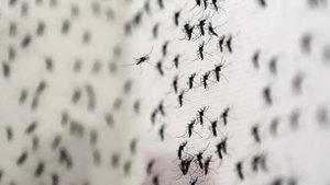 Hindistan'da Zika vakası tespit edildi