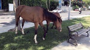Sarıyer'de başıboş at sürprizi