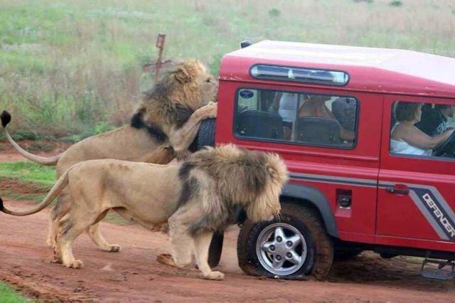 Sadece Afrika'da yaşayabileceğiniz durumlar