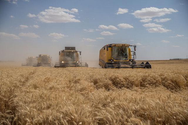 TİGEM'de hasat zamanı başladı