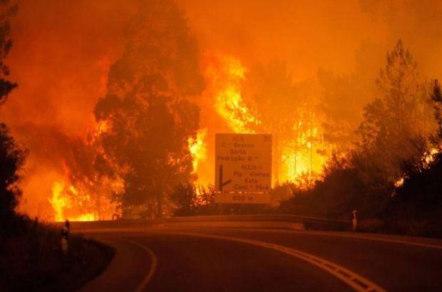Portekiz orman yangın