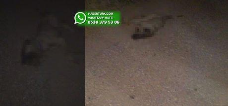 İzmir'in Mordoğan köyündeki kedi ve köpekler zehirlenerek öldürülüyor