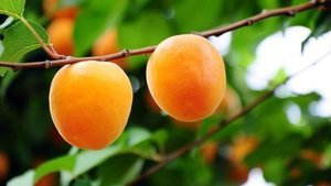 Bu besinler güneşin zararlarından koruyor