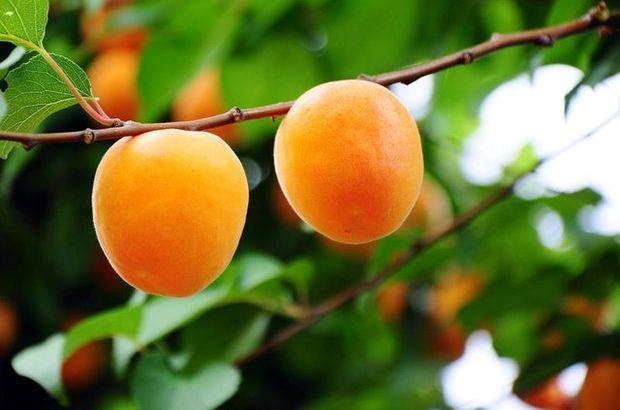Bu besinler güneş hasarından koruyor!