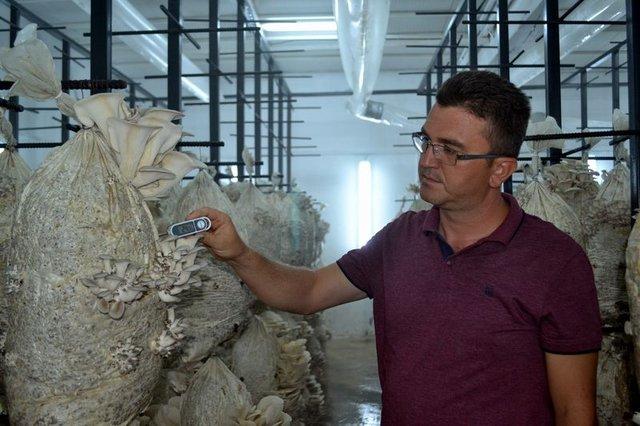 Salihli'de eski açık cezaevi mantar üretim tesisi oldu