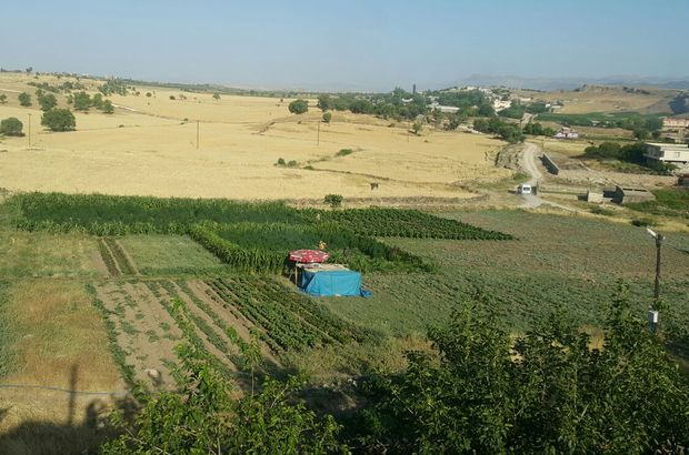 Diyarbakır'da 465 bin kök hint keneviri ele geçirildi