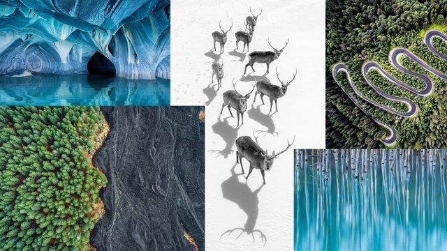 2017 National Geographic Doğa Yarışması için favori karelerini yayınladı