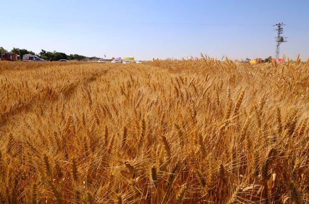 Gıda, Tarım ve Hayvancılık Bakanı Çelik buğday alım fiyatını açıkladı