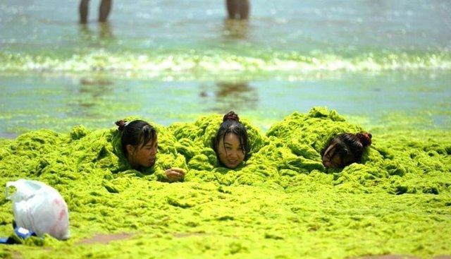 Qingdao'nun yosun denizini turistler çok seviyor