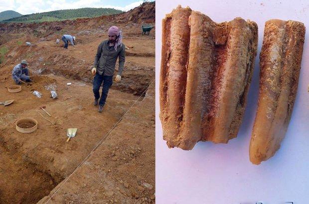200 bin yıllık fosil