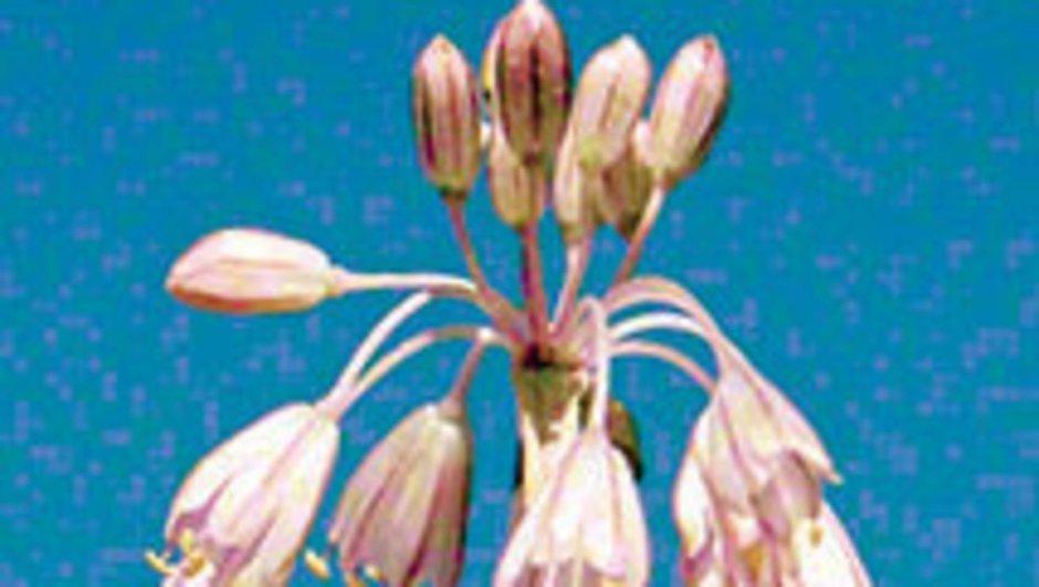 yabani bitki