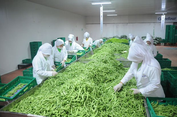Yerli tohumla küçük üretici destekleniyor, ürün fiyatları indiriliyor