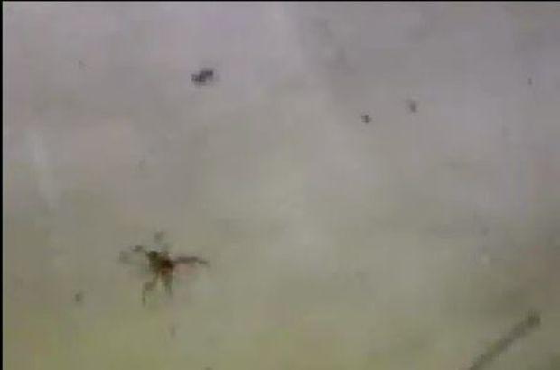 Muğla'da Sarıkız Böceği görüldü