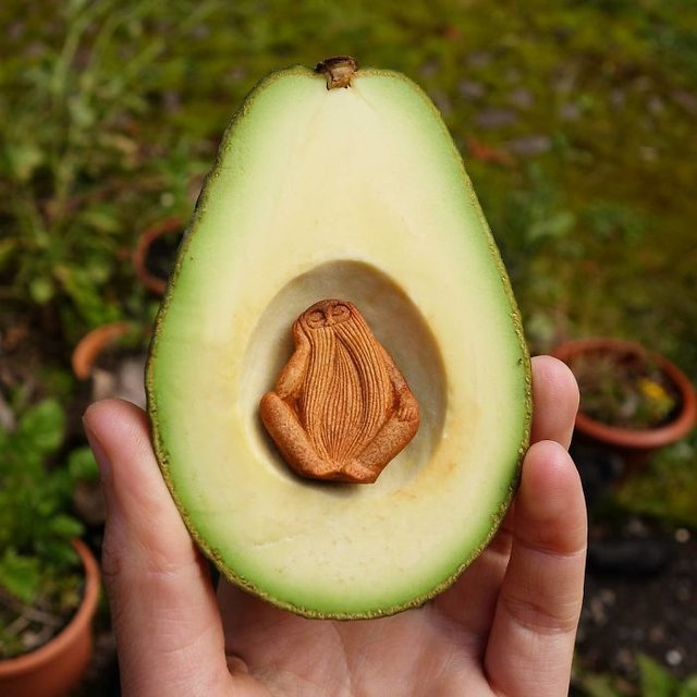 Avokadodan sanat eseri yaptı